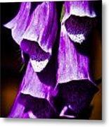 Purple Cascade Metal Print