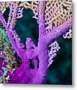 Purple Coral Metal Print