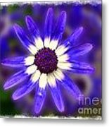 Purple Daisy Photoart Metal Print
