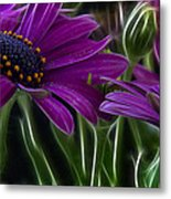 Purple Daisy Metal Print