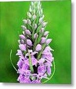 Purple Early Morning Orchid Metal Print