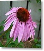 Purple Echinacea Metal Print