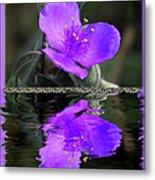 Purple Elegance - Spider Wort Metal Print