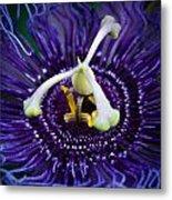 Purple Flower 3 Metal Print