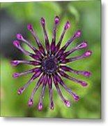 Purple Flower In Bloom Metal Print