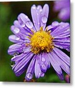Purple Flower Morning Dew Metal Print