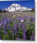 Purple Flowers Blooming Beneath Mount Metal Print