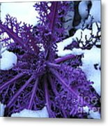 Purple Foliage In Winter Metal Print