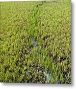Purple Glasswort (salicornia Ramosissima) Metal Print