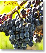 Purple Grapes Metal Print by Elena Elisseeva