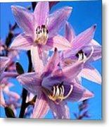 Purple Hosta Blooms Metal Print