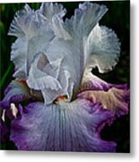 Purple Hues Metal Print