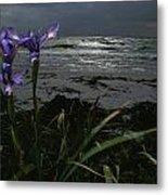 Purple Irises On Beach Metal Print