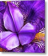 Purple Japanese Iris Metal Print