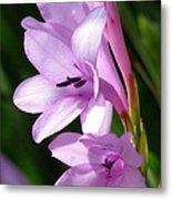 Purple Lilies Metal Print