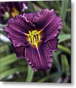 Purple Lilly Metal Print