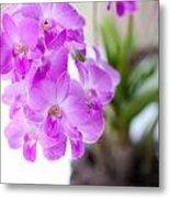 Purple Mini Orchids Metal Print