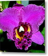 Purple Orchid 006 Metal Print