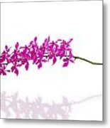 Purple Orchid Bunch Isolated Metal Print