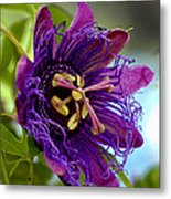 Purple Passion Metal Print by Michelle Harrington
