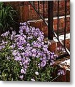 Purple Phlox  Metal Print