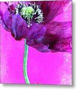 Purple Poppy On Pink Metal Print