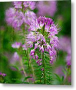 Purple Serenade Metal Print