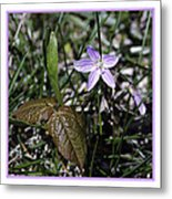 Purple Spring Trail Flower Metal Print