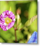 Purple Star Metal Print
