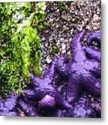 Purple Stars Metal Print