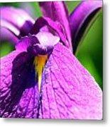 Purple Vision Metal Print