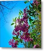 Purple Welcome Metal Print