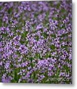 Purple Wildflowers Square Metal Print