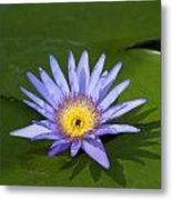 Purple Yellow Lotus Flower Metal Print