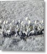 Pushing Tulips Metal Print