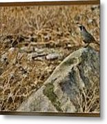Quail On Rock Metal Print