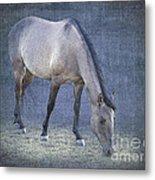 Quarter Horse In Blue Metal Print by Betty LaRue