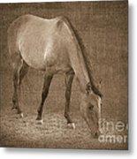 Quarter Horse In Sepia Metal Print by Betty LaRue
