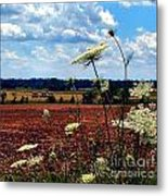 Queen Annes Lace And Hay Bales Metal Print