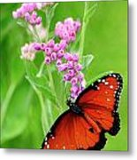 Queen Butterfly And Pink Flowers Metal Print