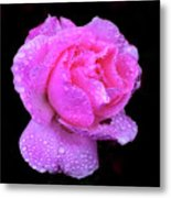 Queen Elizabeth Rose After Heavy Rainfall Metal Print