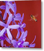Queen's Wreath Honey Bee Metal Print