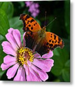 Question Mark Butterfly And Zinnia Flower Metal Print