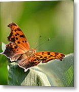 Question Mark Butterfly Metal Print