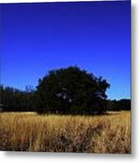 Quiet Meadow Metal Print