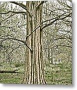 Quiet Tree Metal Print