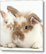 Rabbit And Baby Bunny Metal Print