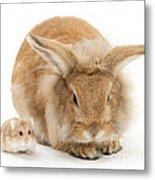 Rabbit And Dwarf Hamster Metal Print