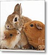 Rabbit And Guinea Pigs Metal Print
