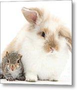 Rabbit And Squirrel Metal Print